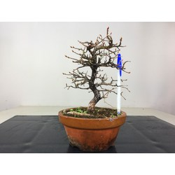 IMPORT 2019 - CARPINUS...