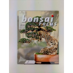 Bonsai Focus nº 6