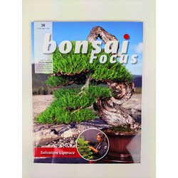 Bonsai Focus nº 38